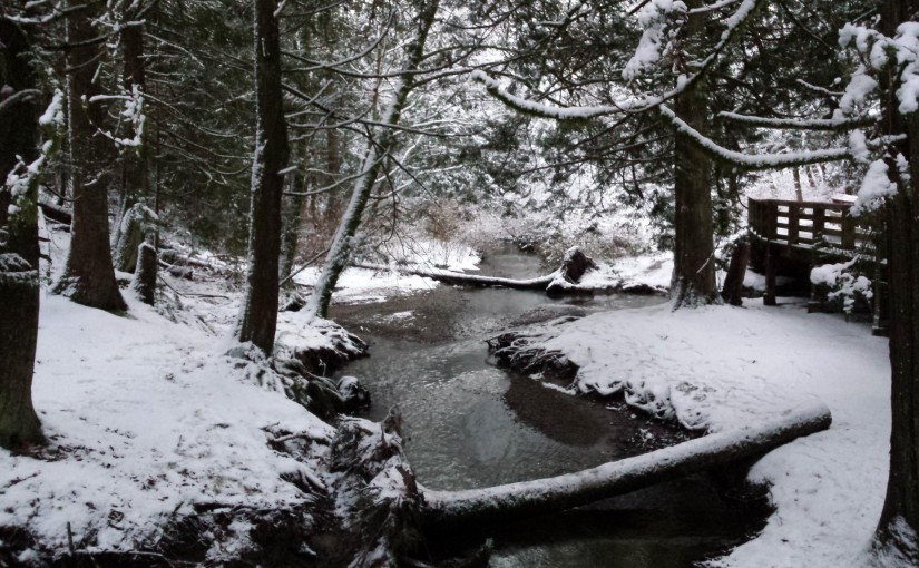 Yorkson Creek in the Snow