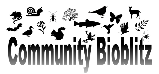 Langley Watershed Bioblitz